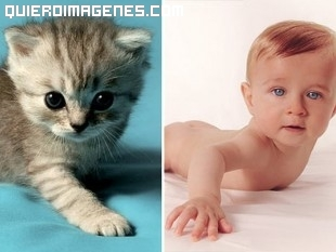 Comparación gatito y bebé