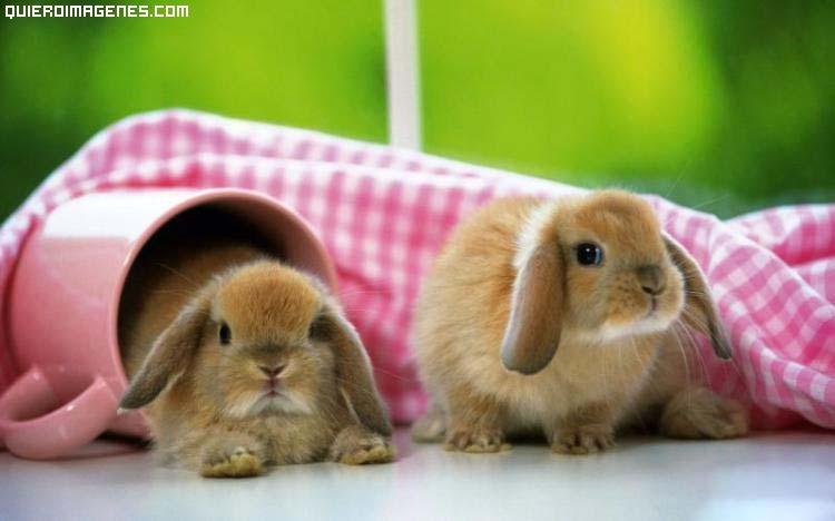 Dos lindos conejitos