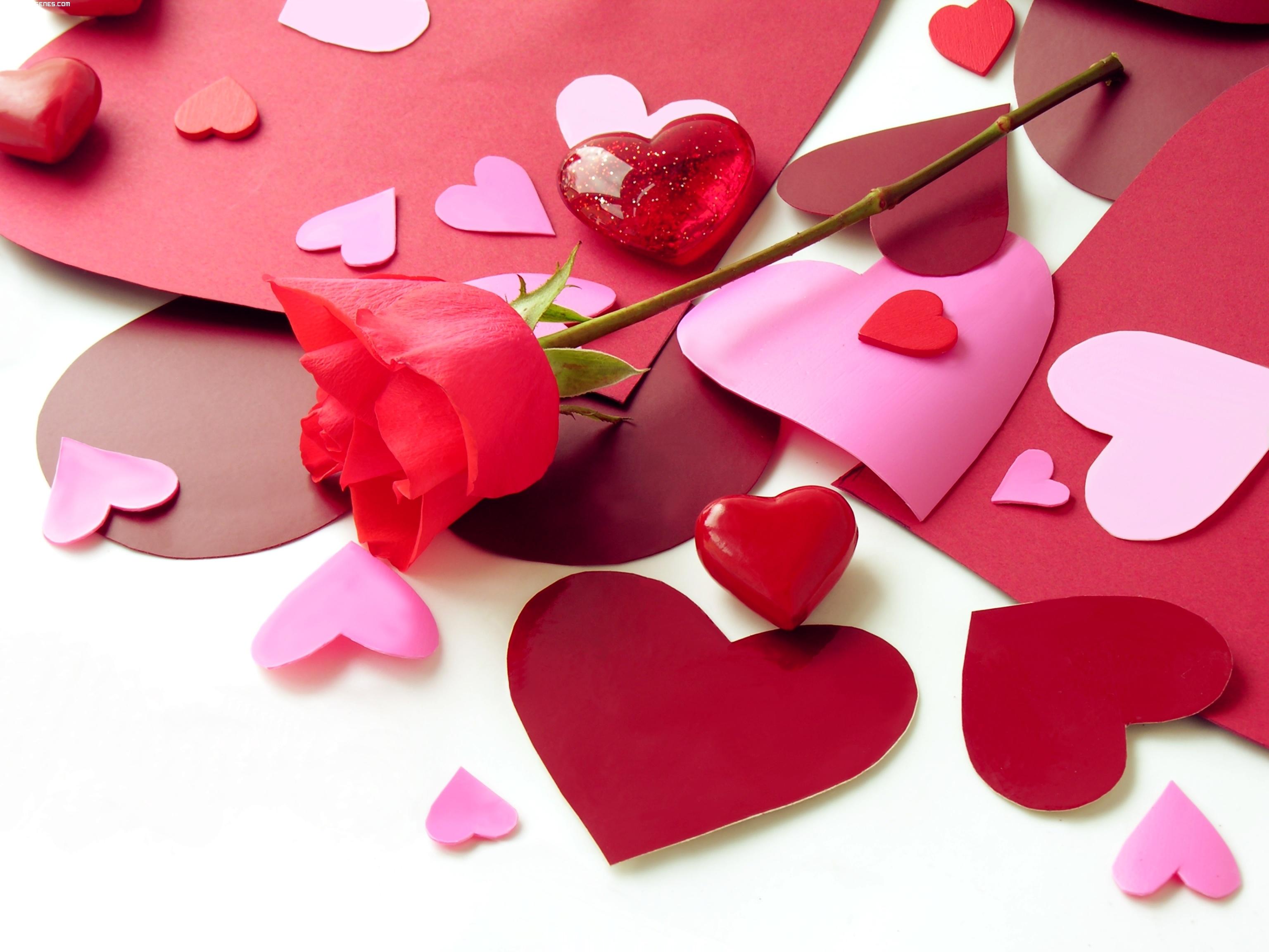 corazones y rosa
