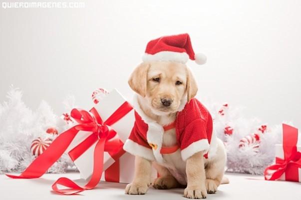 Un cachorro navideño