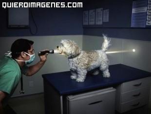 ¿Perro hueco?