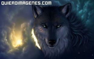 Lobo desafiante