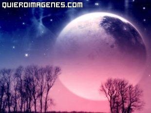 Luna malva
