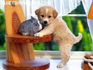 Imagen de perrito y conejo