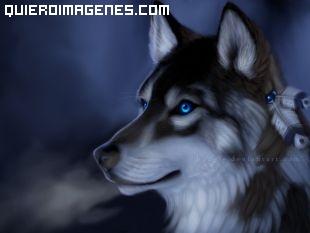 Perro de nieve con ojos azules
