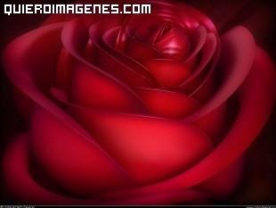 Aterciopelada rosa color rojo pasión