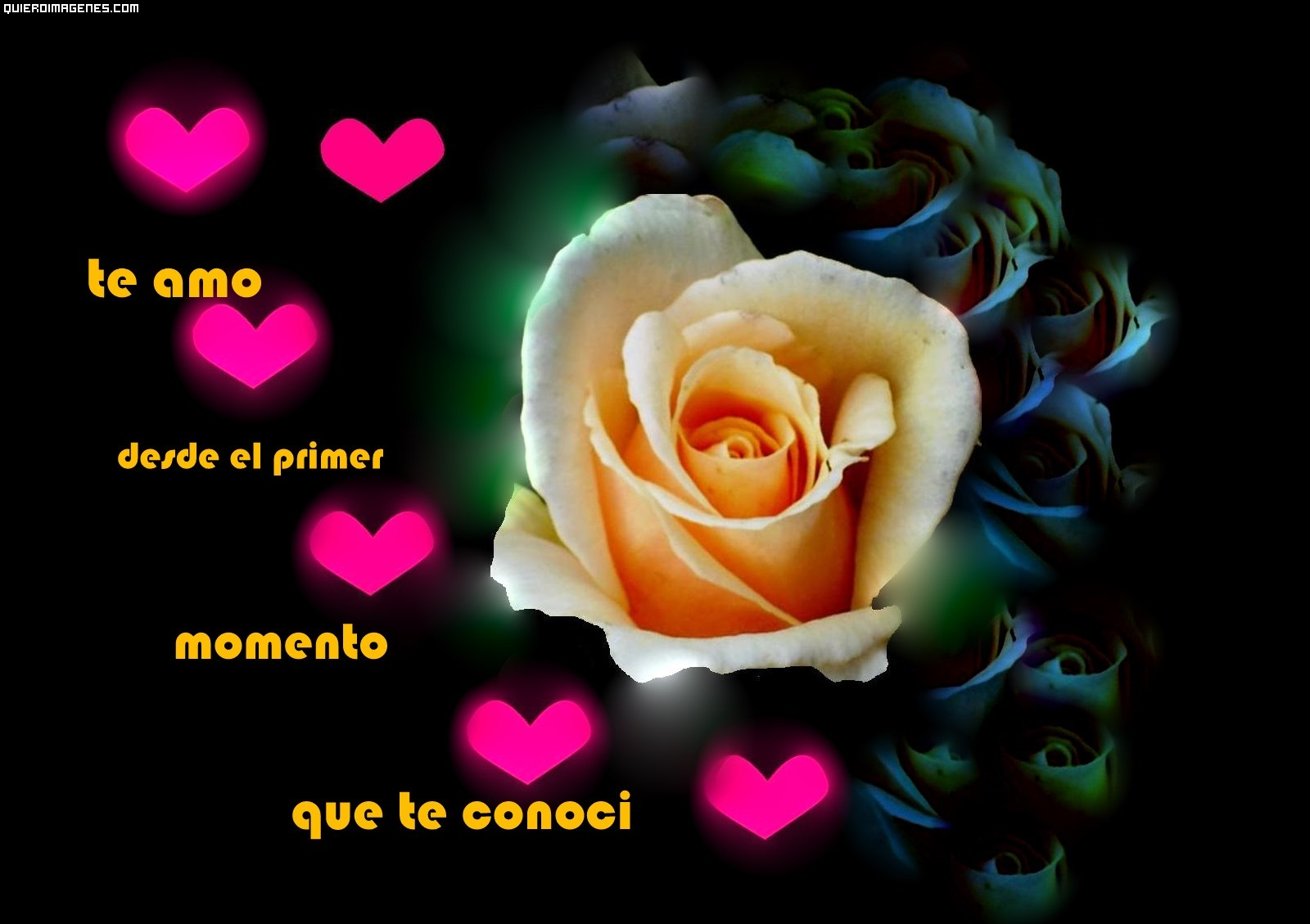 Rosa con dedicatoria