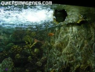 Algas y peces