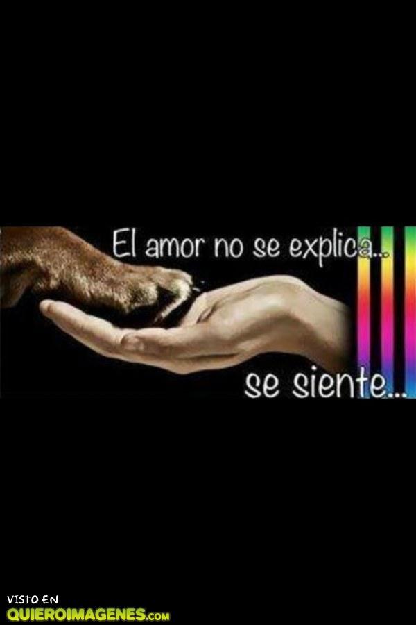 El amor no se explica