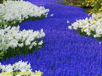 Imagenes de Flores de Colores