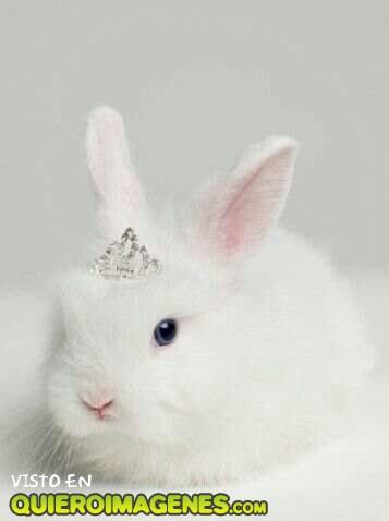 El conejito con corona