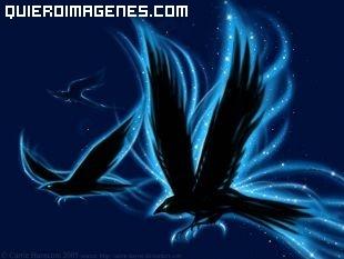 Cuervos volando