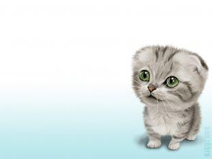 Gatito cabezon