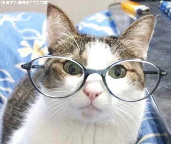 Mi gato tiene un blog