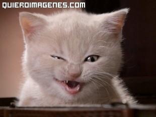Gato malicioso