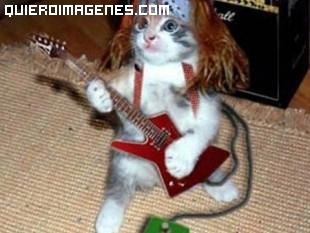 Un gato rockero
