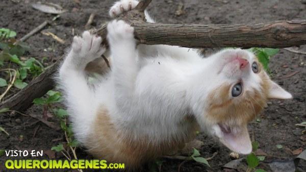 Gato trepando por la rama