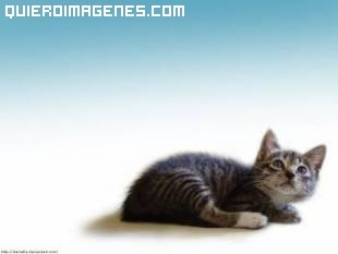 Imagen de gato solitario
