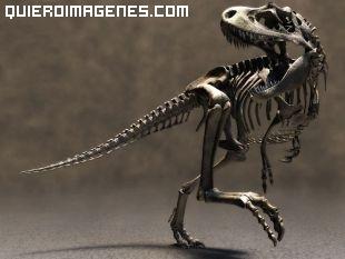 Esqueleto fosil de Velociraptor