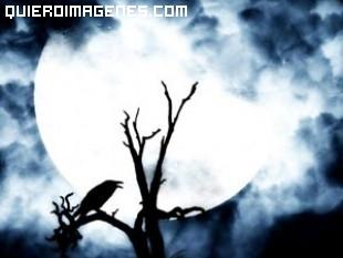 Luna llena ilumina un arbol