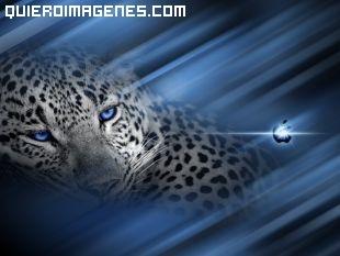 Leopardo