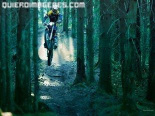 Motocros en la penumbra del bosque