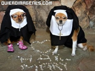 Perros monja