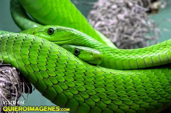 La gran serpiente
