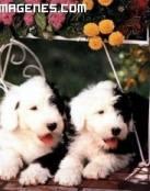 Cachorritos de perro