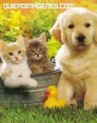 Un perro con dos amigos