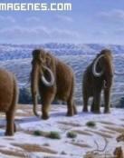 Clonación de Mamuts