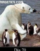 Pingüinos y oso polar disfrazado