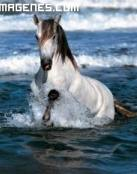 Caballo disfrutando del mar