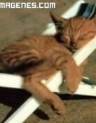 Gatito tomando el sol