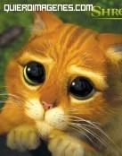 Un lindo gatito en Shrek