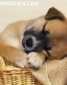 Imagen tierna de perrito