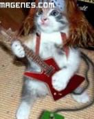 Gatito rockero