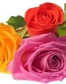 Amor para San Valentín