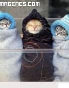 Gatitos con gorros