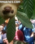 Mono boca abajo