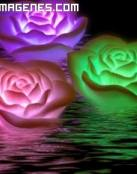 Rosas de colores navegando en el mar