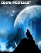 El lobo y la luna
