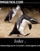 Pingüino juega al escondite