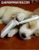 Cachorro hablando por teléfono