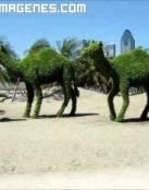 Esculturas de camellos vegetales
