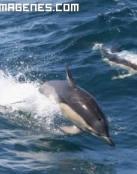 Pareja de delfines dando saltos en el océano