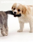 Mascotas tiernas