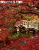 Espectacular jardín japonés en otoño