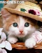 Gatito con sombrero primaveral