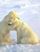 Abrazo animal